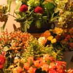 nv_frischeblumen_05