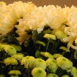 nv_frischeblumen_06