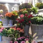 nv_frischeblumen_10